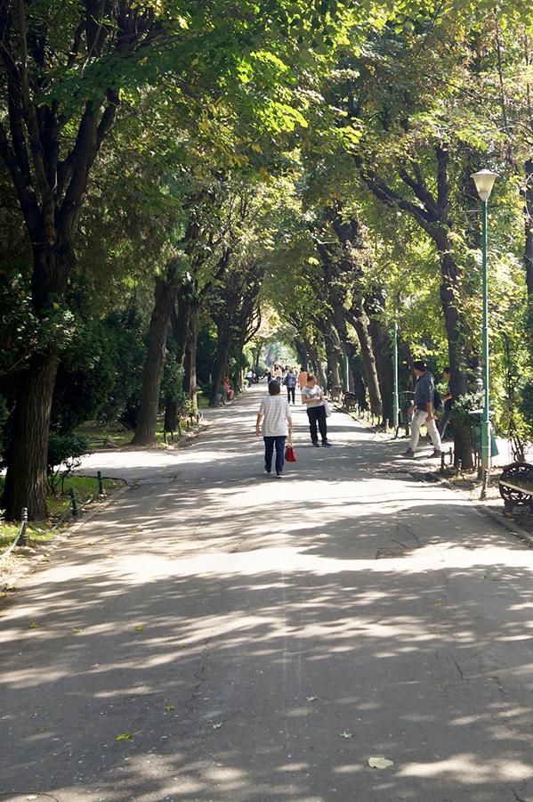 efekt-kontrastu-bukareszt-park-aleja