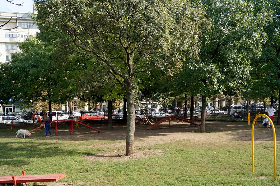 efekt-kontrastu-bukareszt-park-psy